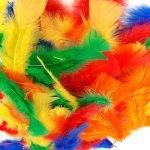 Plumes multicolres ( rouge, jaune, vert, bleu, orange)