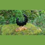 'Black moon' sculpture en mélèze avec son socle en loupe de peuplier