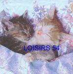 Serviette papier 2 chats dormeur