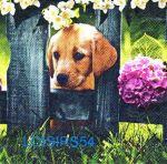 Serviette papier chien Basset - 33 cm x 33 cm
