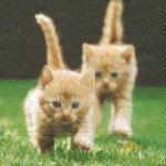 Serviette papier 2 chatons dans l'herbe 33cm X 33 cm 3 plis
