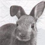 Serviette papier lapin gris 33 cm X 33 cm