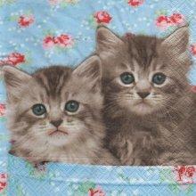 Serviette papier 2 petits chats 33 cm X 33 cm 3 plis