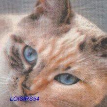 Serviette papier chat brun - 33 cm x 33 cm