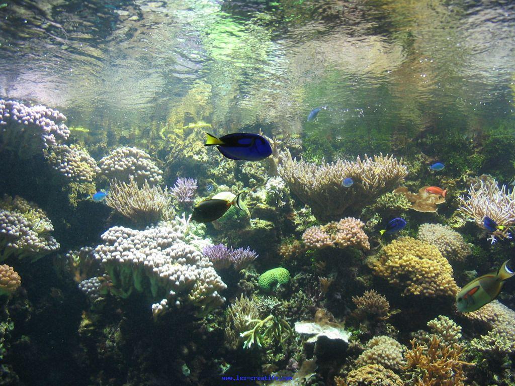 Maxalae fond d cran pour tlphone for Fond ecran aquarium